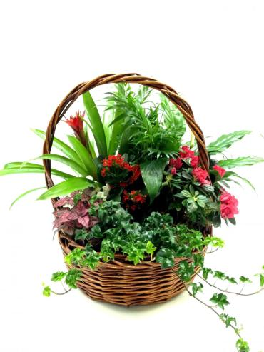 Large Plant Basket