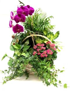 Plants, Baskets, & Dish Gardens