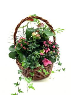 Medium Plant Basket